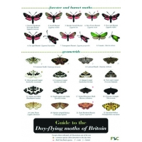 Day-flying Moths, a laminated fold-out chart