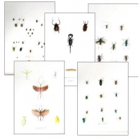 Collection H EXTRAORDINARY INSECTS (1)