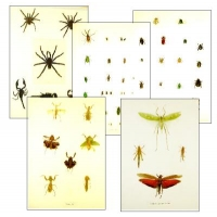 Collection K EXTRAORDINARY INSECTS (2)