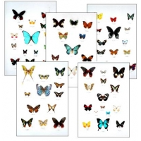Collection L SPECIAL LEPIDOPTERA