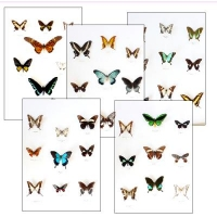 Collection N SWALLOWTAILS OF THE WORLD
