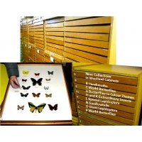 BUTTERFLY COLLECTIONS in CABINETS Second Hand