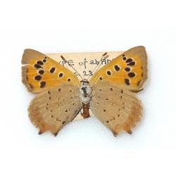 C077 L. phlaeas Small Copper ab addenda